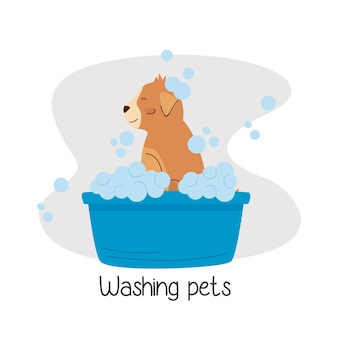 Kleine hond aan het baden in blauw bad