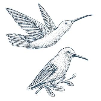 Kleine kolibrie. rufous en witnek jacobin vogel. exotische tropische dieren iconen.