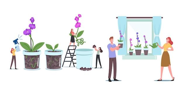 Kleine mannelijke en vrouwelijke personages kweken orchideeën phalaenopsis in potten thuis vensterbank, tuinieren, hobby planten kweken en composities maken concept. cartoon mensen vectorillustratie