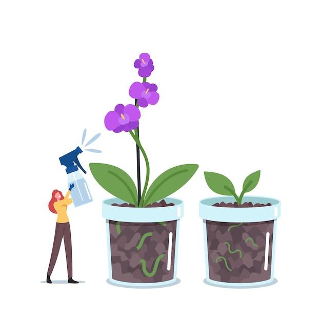 Kleine vrouw botanicus drenken of spuiten enorme orchidee phalaenopsis home plant in bloempot. tuinieren hobby, vrouwelijke karakterverzorging van binnenlandse bloem in pot, exotische bloesem. cartoon vectorillustratie