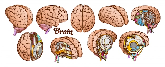 Kleur brain set collectie