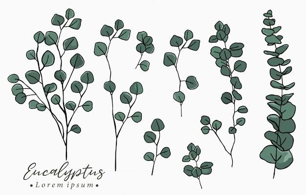 Kleur eucalyptus logo collectie met bladeren, geometrisch.