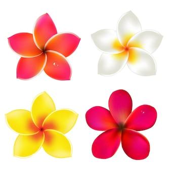 Kleur frangipanis set, met verloopnet,