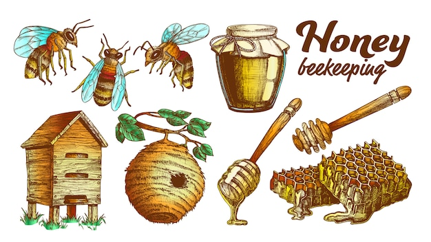 Kleur honing bijenteelt bijenteelt set.