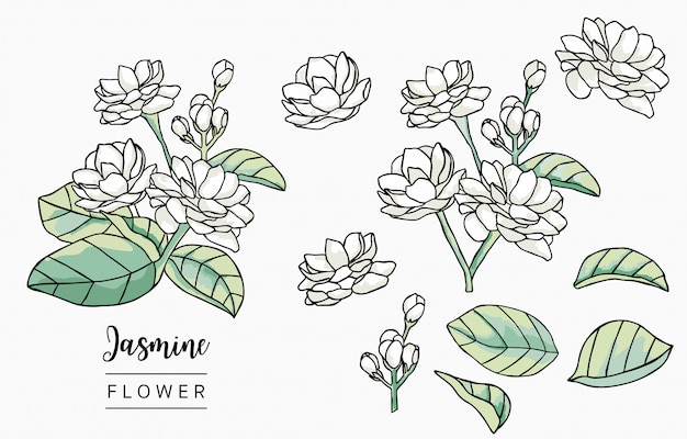 Kleur jasmin logo collectie met bladeren, geometrisch.