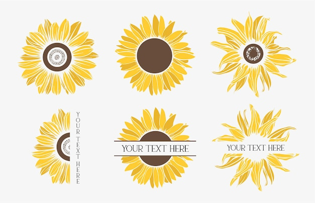 Kleur zonnebloemen instellen. bloem.