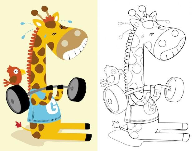 Kleurboek of pagina van grappige giraffe tillen van zware barbell
