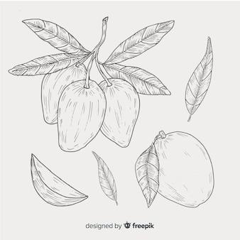 Kleurloze hand getrokken mango achtergrond