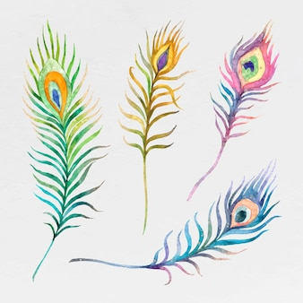 Kleurrijke aquarel pauwenveer set