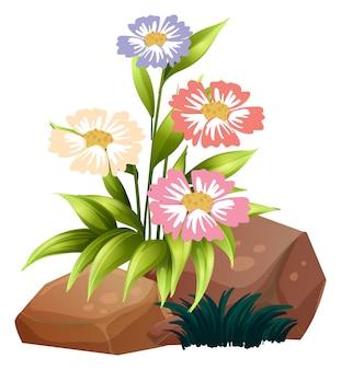 Kleurrijke bloemen en rotsen op wit
