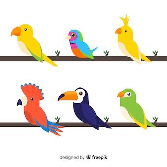 Kleurrijke exotische vogel collectie plat ontwerp
