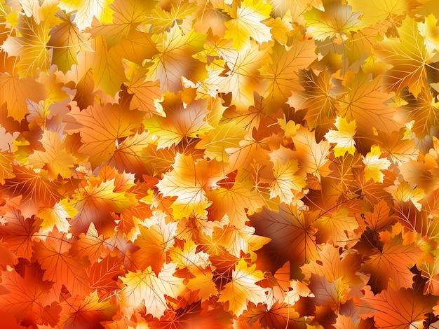 Kleurrijke herfstbladeren.