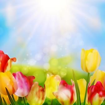 Kleurrijke lente bloemen tulpen.