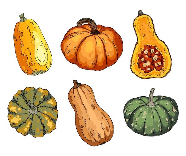 Kleurrijke pompoenreeks. schets van voedsel.