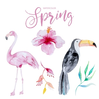 Kleurrijke reeks vogels en tropische bloemen