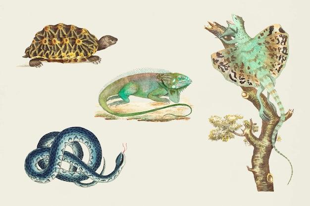 Kleurrijke reptielen vintage set