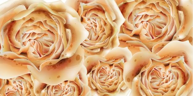 Kleurrijke rozen in waterverf