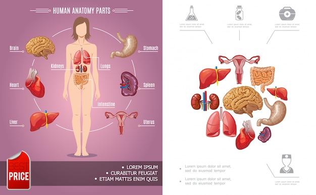 Kleurrijke samenstelling van de menselijke anatomie van het beeldverhaal met de lichaamsdelen van de vrouw en medische pictogrammen