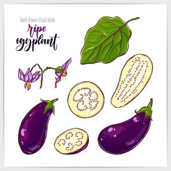 Kleurrijke set van rijpe en smakelijke aubergines, geheel en in plakjes, met bladeren. hand getekende illustratie met hand belettering kop.