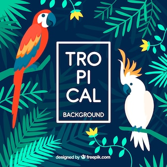 Kleurrijke tropische achtergrond met platte ontwerp