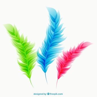 Kleurrijke veren