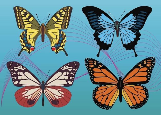 Kleurrijke vlinder vectoren