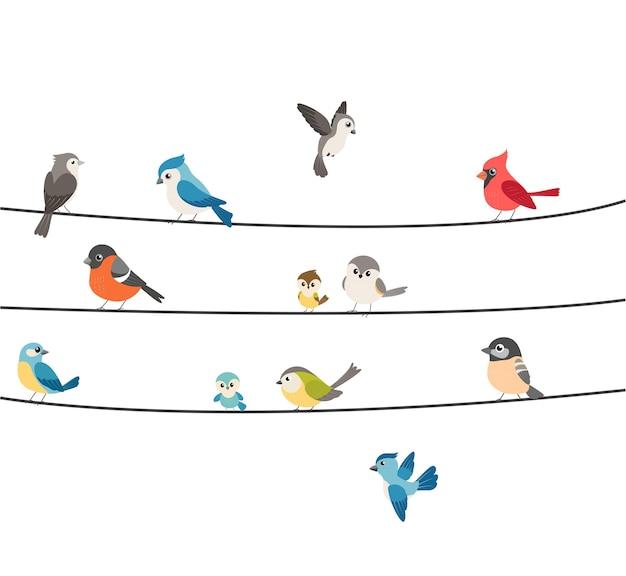 Kleurrijke vogels zittend op draad