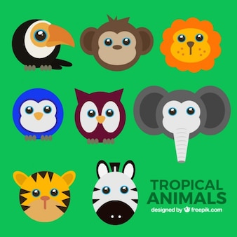 Kleurrijke wilde dieren avatars set