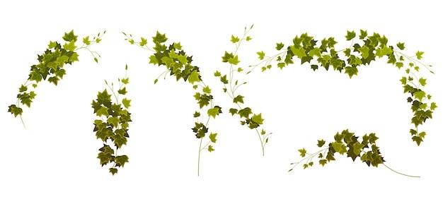 Klimop wijnstokken hoeken en randen klimplanten takken