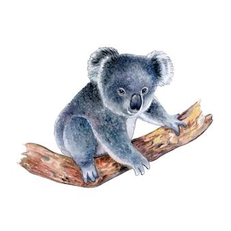 Koala geïsoleerd op een witte achtergrond aquarel illustratie templateclipart