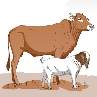 Koe en geit