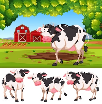 Koe op het platteland