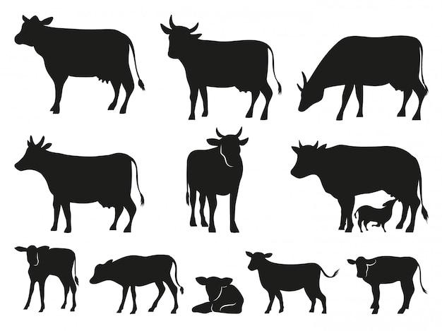 Koe silhouet. zwarte koeien en kalf zoogdier dieren pictogrammen instellen