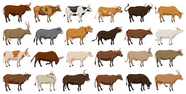 Koe van dier vector cartoon ingesteld pictogram. geïsoleerde cartoon pictogram boerderij dier van koe