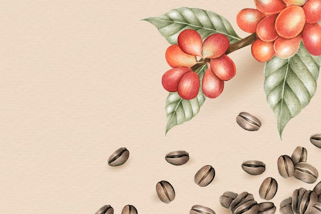 Koffiebonen en plant