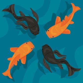 Koi vier vissen