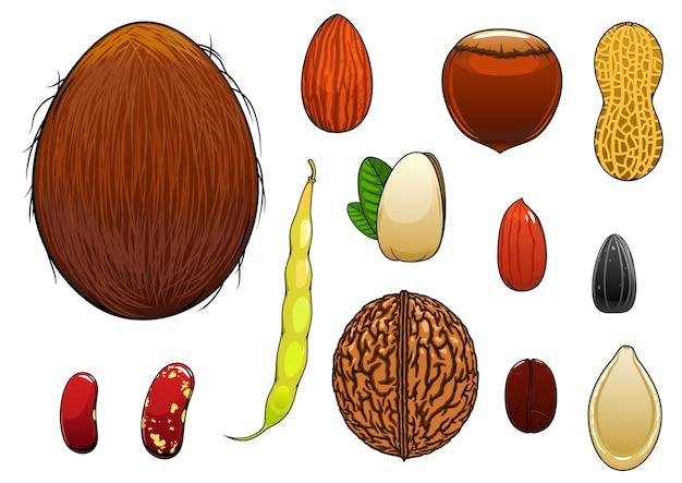 Kokosnoot, amandel, hazelnoot, pistache, koffieboon, hele en gepelde pinda's