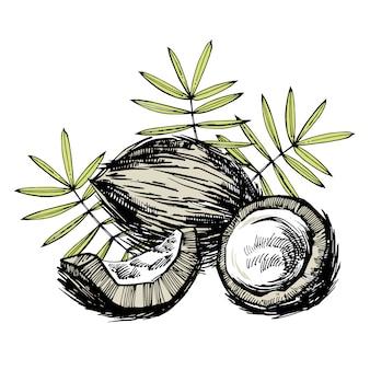 Kokosnoot hand getrokken schets met palmblad