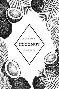 Kokosnoot met palmbladeren ontwerpsjabloon. hand getekend voedsel illustratie. gegraveerde stijl exotische plant. retro botanische tropische achtergrond.