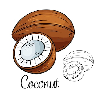 Kokosnoot tekening pictogram