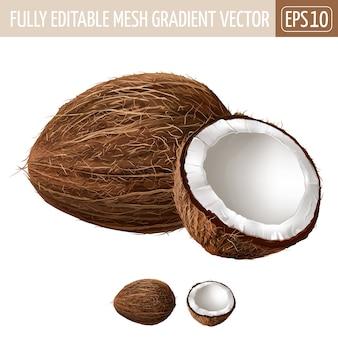 Kokosnotenillustratie op wit