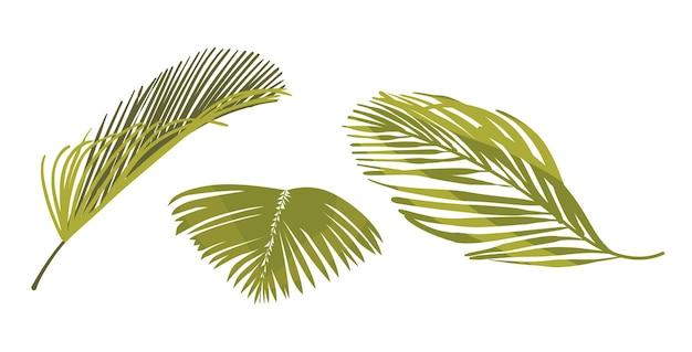 Kokospalm bladeren grafisch ontwerpelementen geïsoleerd op een witte achtergrond. tropische plantenbladeren, groene palmtakken voor reclame of zomerpromo, natuurlijke flora. cartoon vectorillustratie