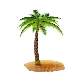 Kokospalm op witte achtergrond voor uw creativiteit wordt geïsoleerd die