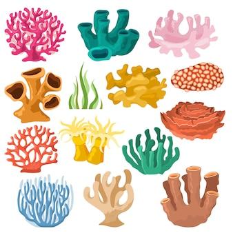 Koraal zee koraal of exotische cooralreef onderzeese illustratie koraalloïde set van natuurlijke mariene fauna in oceaanrif en waterplant voor aquarium geïsoleerd op witte achtergrond