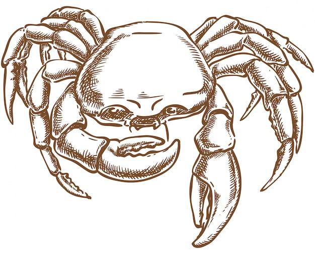 Krab vector schets hand tekenen