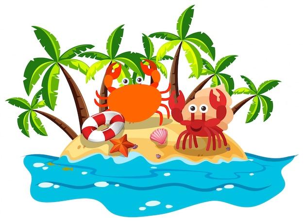 Krabben leven op het eiland