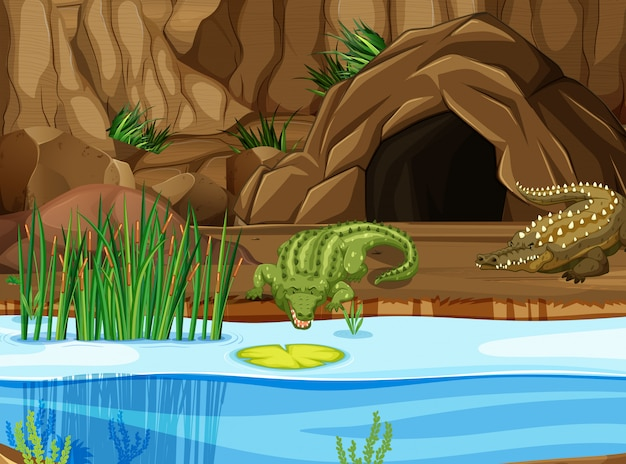 Krokodil bij het moeras