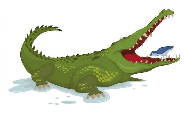 Krokodil en een vogelillustratie