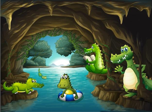 Krokodillen zwemmen in de grot