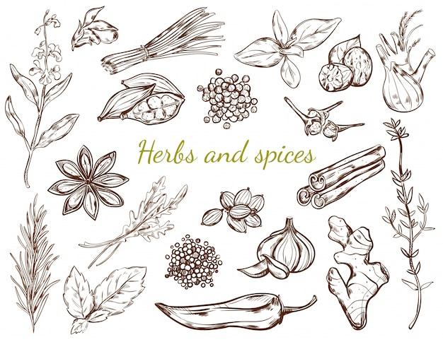 Kruiden en specerijen collectie